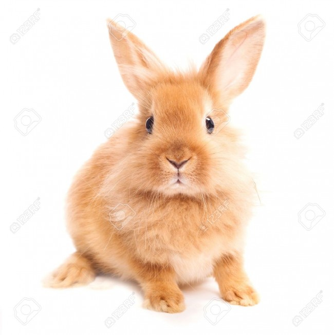 Conejo-aislado-en-un-fondo-blanco-Foto-de-archivo