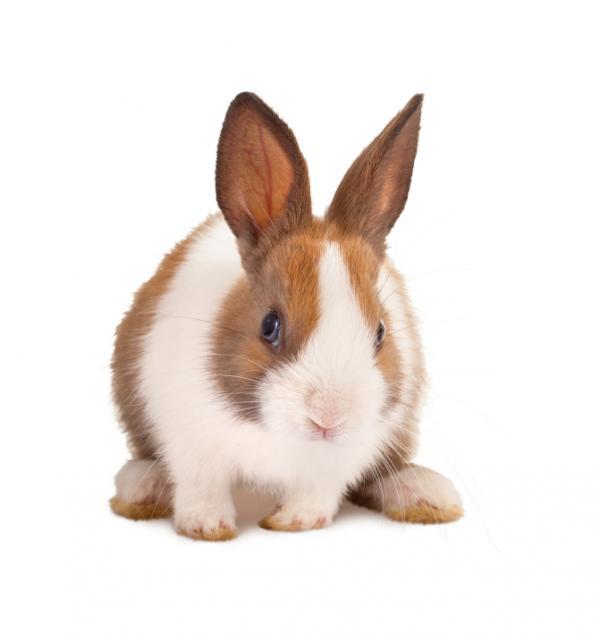 conejos_4056_600