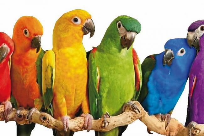 aves_son_domesticas_0