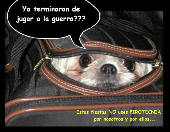 fuegono_a_la_pirotecnia_2