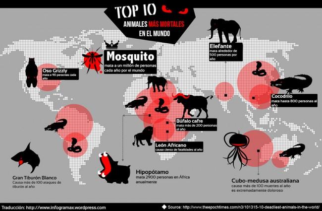 mortop-10-deadliest-animals-in-the-world_52ba865607db31