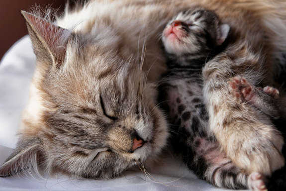 Gatitos-recien-nacidos-2