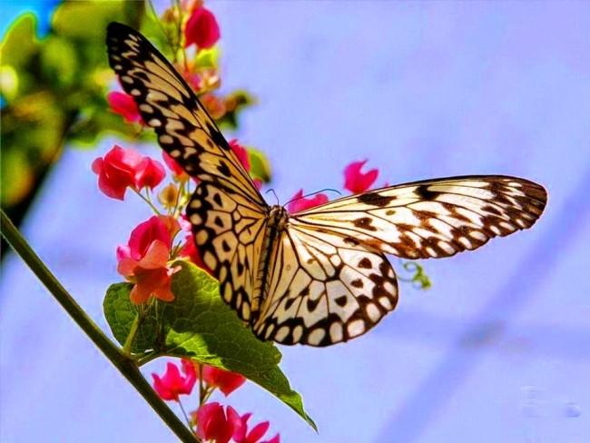 Mariposas 100