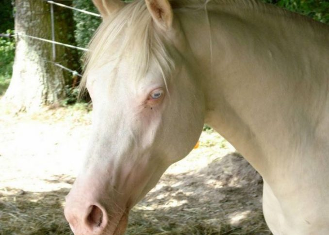 albinismotimthumb-php