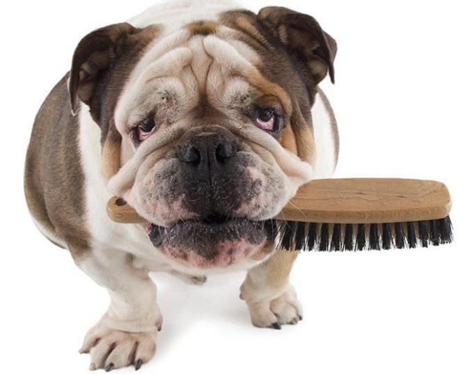 C mo peinar a mi perro c mo cepillarlo - Como banar a un perro ...