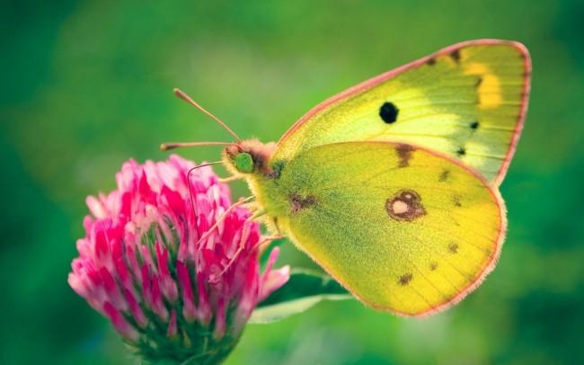 mariposa_hermosa_en_una_flor_roja-1280x800