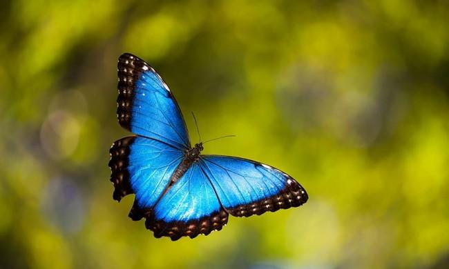 mariposas-24