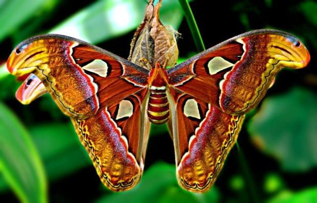 mariposas0449-620x396