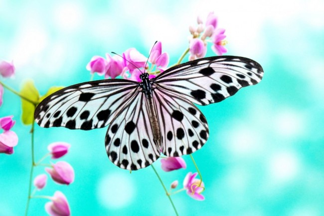 mariposas08d