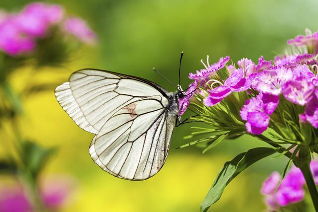 mariposas7-interesantes-datos-sobre-las-mariposas-que-van-a-fascinarte-3