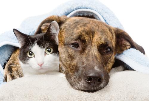 tumor-en-perros-y-gatos
