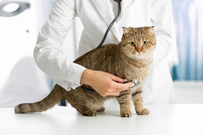 zaatosmetodos-de-esterilizacion-en-los-gatos