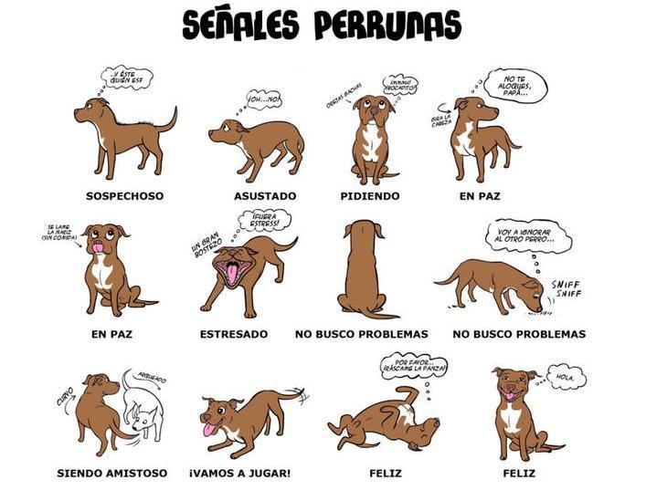 Cuando los perros mueven la cola ¿Qué quieren decir? Meneo