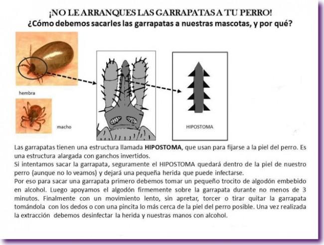 Soluciones caseras para eliminar las garrapatas en los - Como eliminar las pulgas de casa remedio casero ...