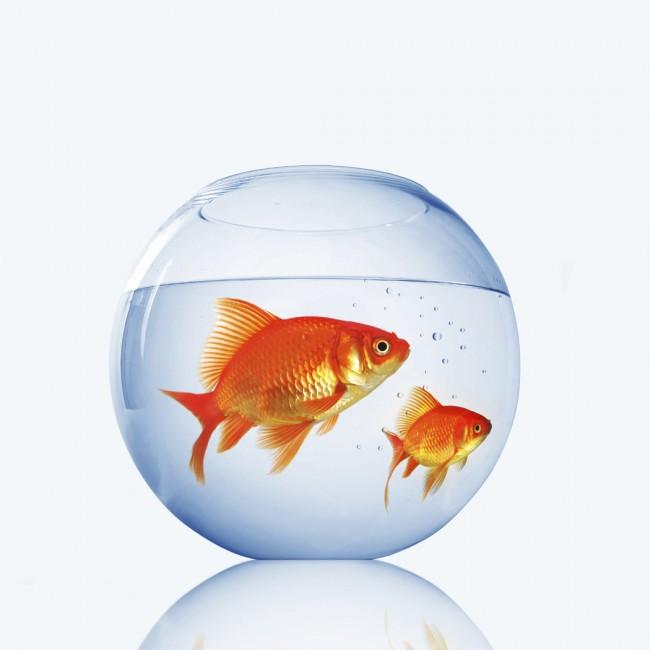peces8655162