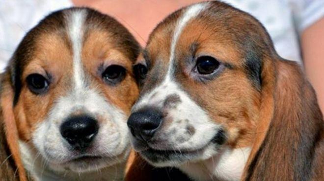 primeros-cachorros-caninos-probetaweb_IECIMA20151210_0074_7