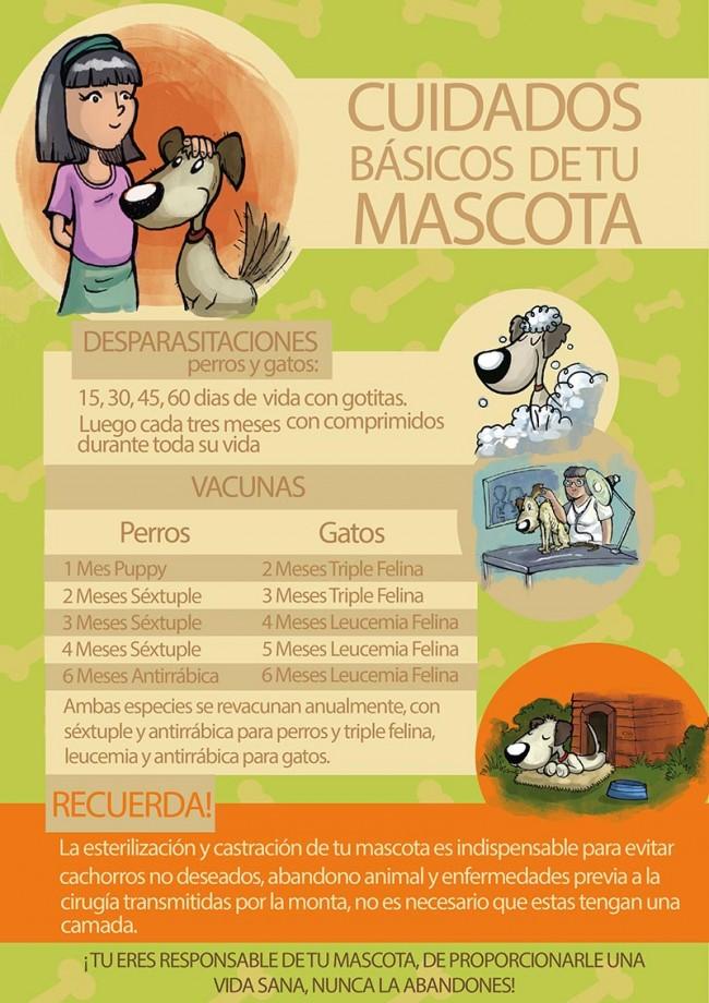 Trato responsable de los animales infograf a para descargar y compartir en las redes sociales - Cuidados de las hortensias ...