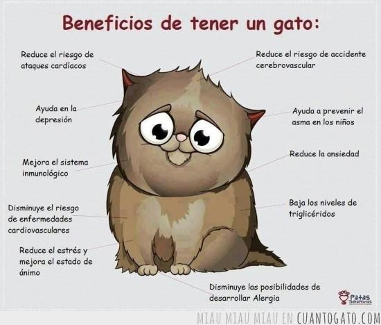 ronroneocg_26668_por_eso_y_muchas_cosas_mas_tengo_gatos
