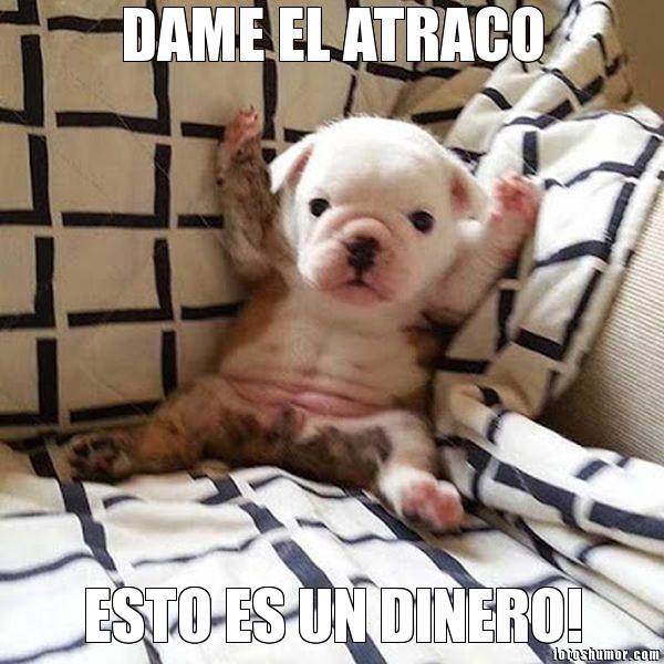 801611451517930 memes de perros memes de perros graciosos con chistes muy divertidos