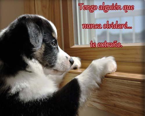 Imagenes-de-perros-con-frases-de-amor-7