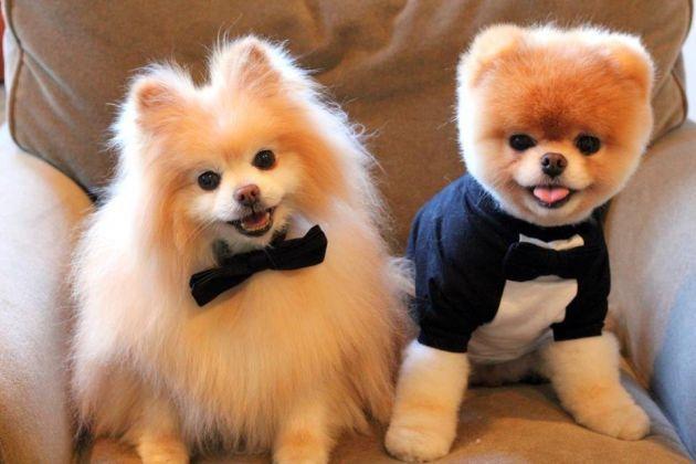 Imagenes De Gatos Y Perros Tiernos Y Graciosos