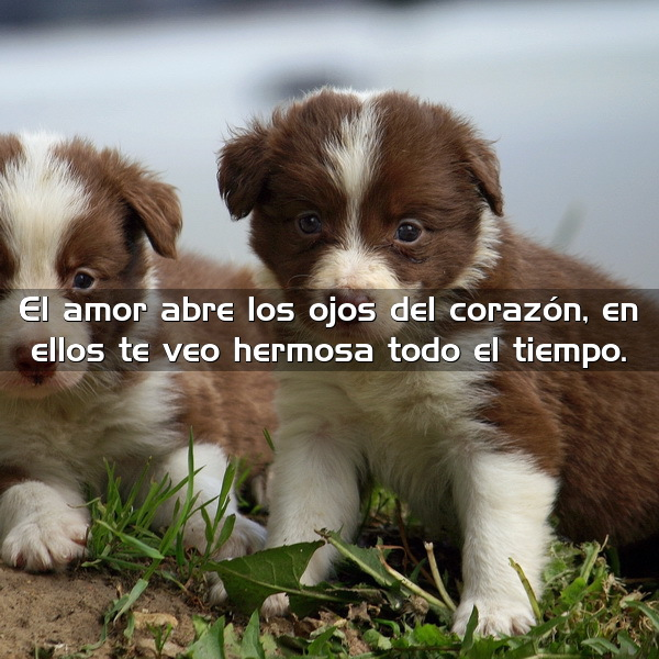 ImagenesEnHD.Net_dos-perritos-cachorros_600x600