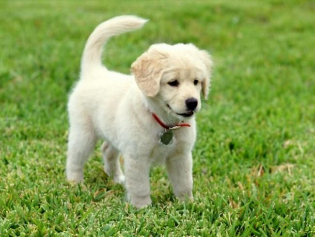 Imagenes de perritos bebes de todas las razas - Es malo banar mucho a los perros ...