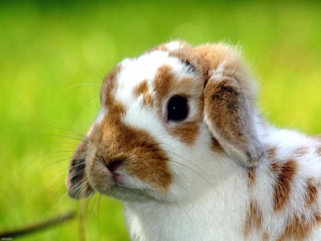 conejos-9