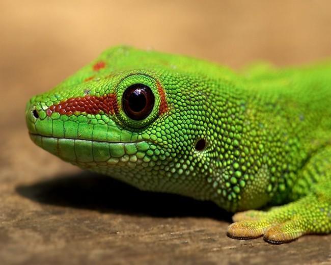 fonduos-animales-exoticos