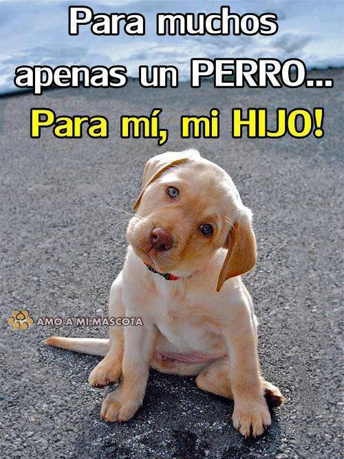 fotos-perritos-amo-a-mi-mascota