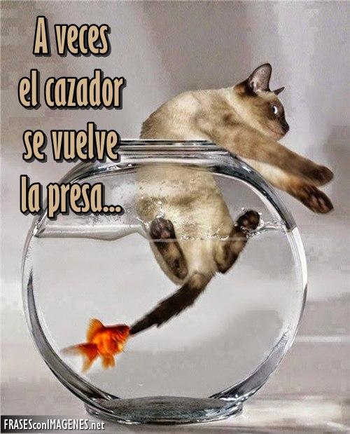 Imágenes de ANIMALES para Descargar Gratis con Frases