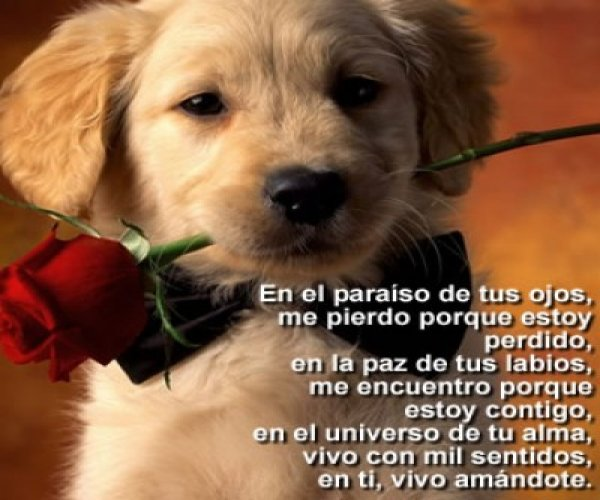 Imágenes De Perros Bonitos Con Frases