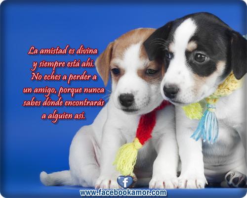 imagenes-bonitas-de-lindos-perros-con-frases-de-amistad-para-facebook