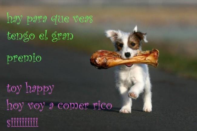 imagenes-con-frases-perros-divertidos