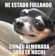 Descargate las mejores imágenes de memes de animales. Las mas graciosas y  gratis!! ...