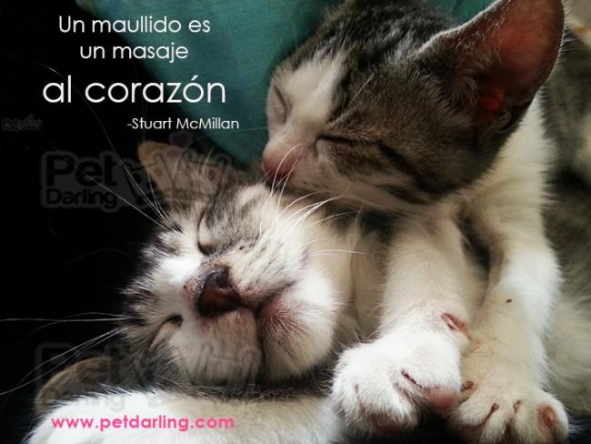 Imagenes De Gatitos Tiernos Para Descargar Gratis: Gatitos Lindos Con Frases Bonitas De Amor Para Descargar