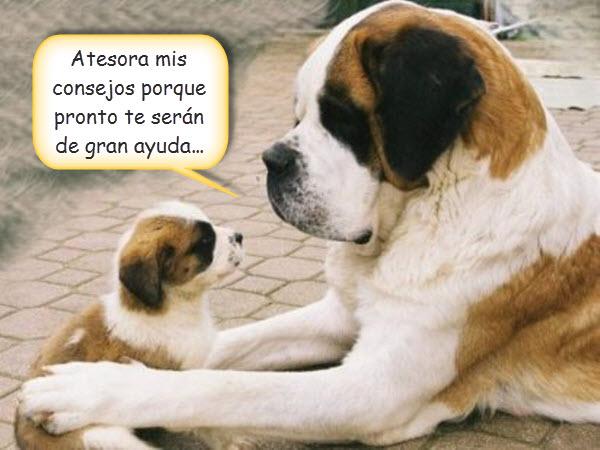 perros-con-frases-de-amor