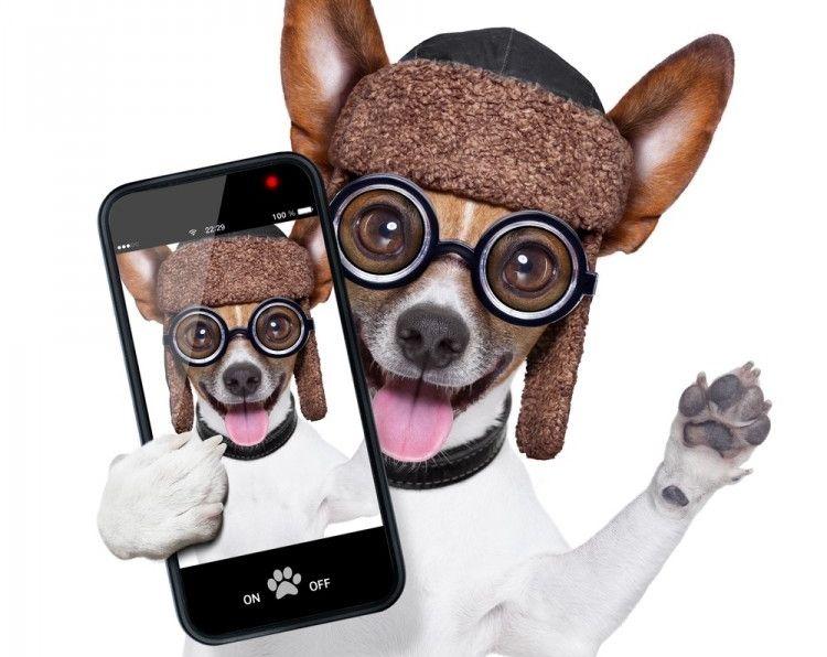 viajaraplicaciones-perros-viajar-art