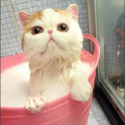 zato¿Debemos-bañar-a-nuestros-gatos
