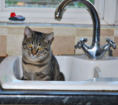 zatoCómo-bañar-a-un-gato