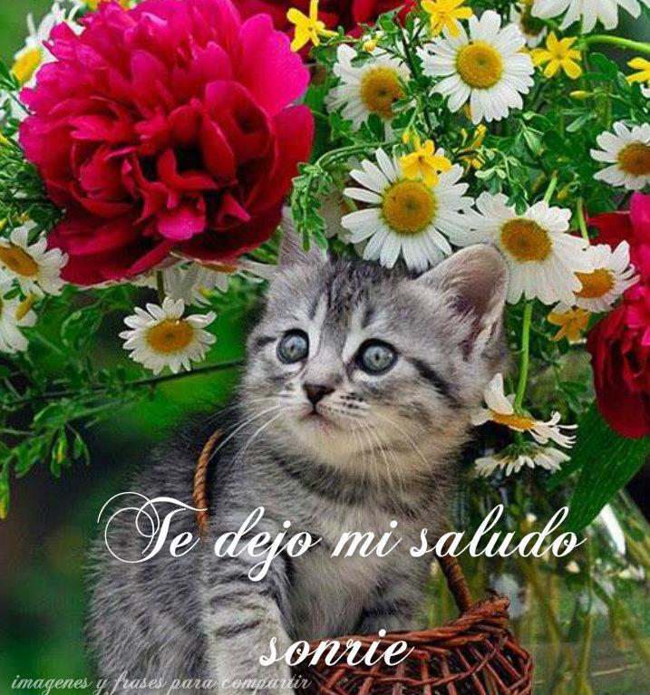 Imagenes De Gatitos Con Frases Cortas Bonitas Para Whatsapp