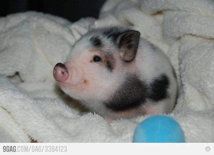 Bonitas imágenes de animales bebés para descargar y compartir en ...