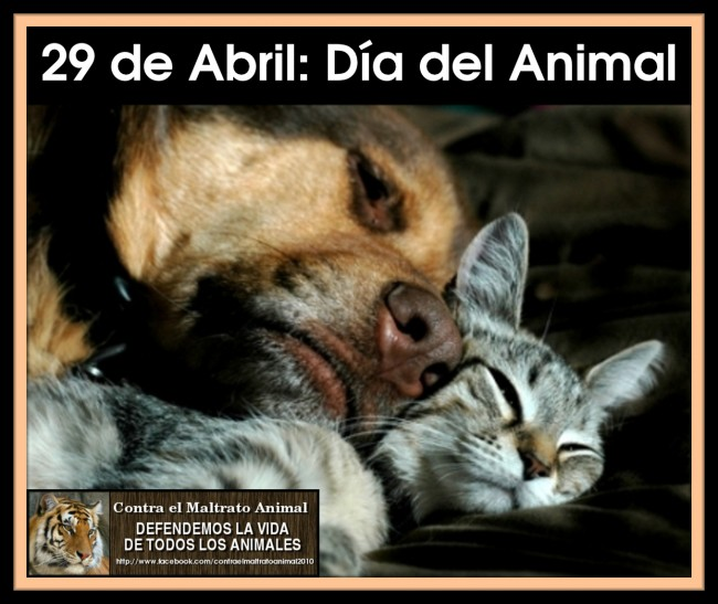 29-de-abril-Dia-del-Animal