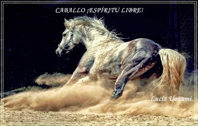 CABALLO ¡ESPÍRITU LIBRE!