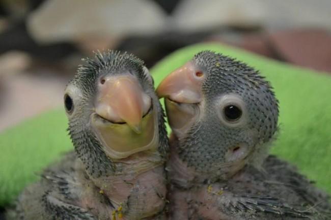 animales-bebes-3