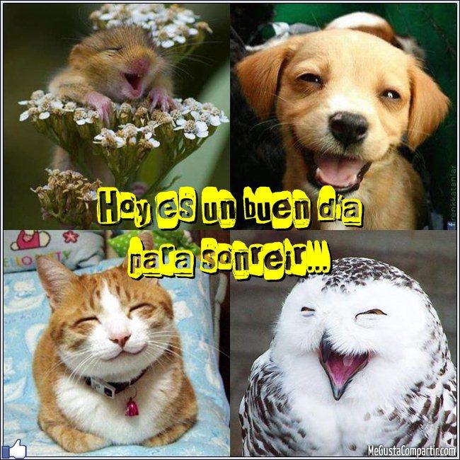 animales-sonriendo