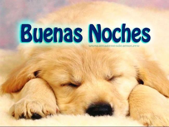 Bonitos perritos con frases de Buenas Noches en imágenes