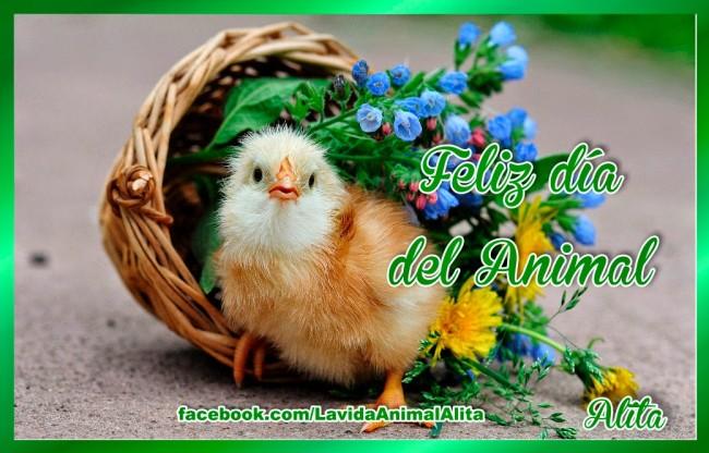 dia del animal 1