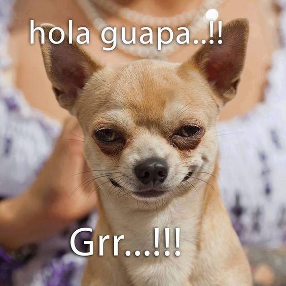 Imágenes de Perritos con frases cortas Bonitas para Whatsapp