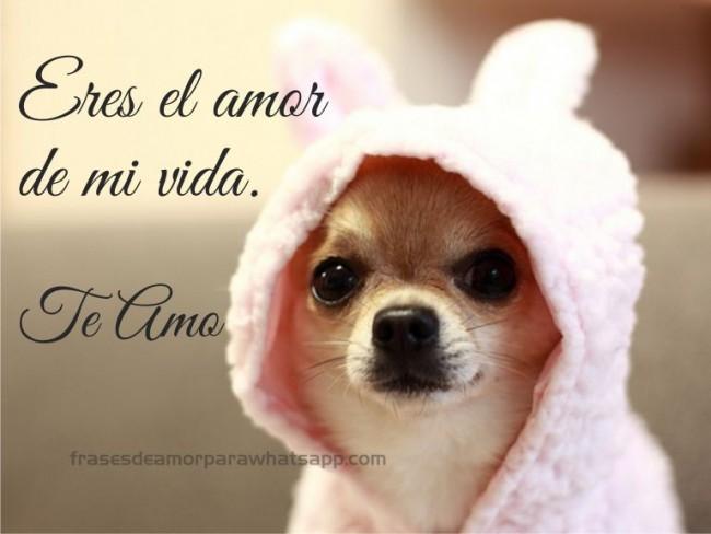 Frasesamor Frases Cortas De Amor Hacia Los Perros